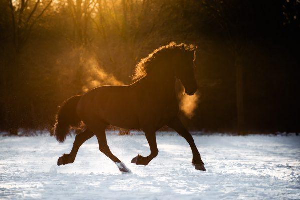 Nance Fotografie_paardenfotografie_fries-1