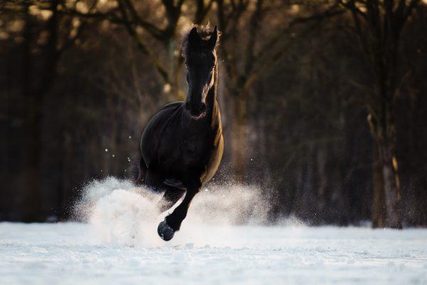 Nance Fotografie_paardenfotografie_fries-2