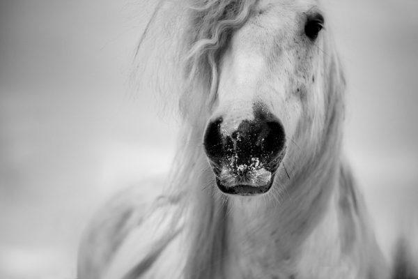 Nance Fotografie_paardenfotografie_pony in sneeuw-1